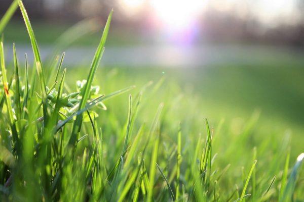 Nawoz do trawy
